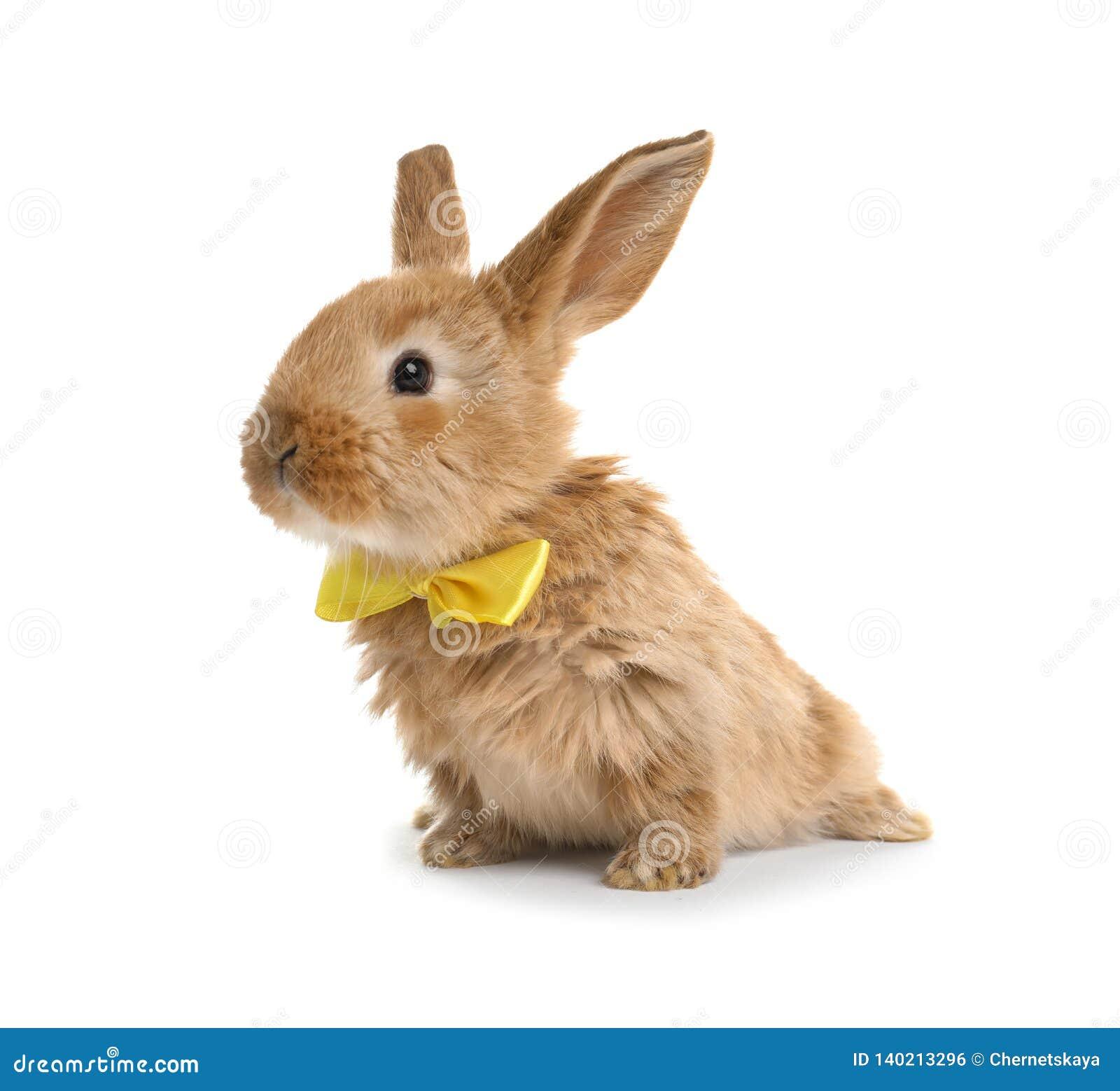 Coelhinho da Páscoa peludo adorável com laço bonito