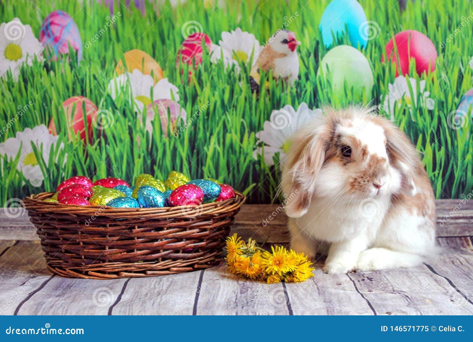 Coelhinho da P?scoa, coelho bonito com uma cesta dos ovos da p?scoa