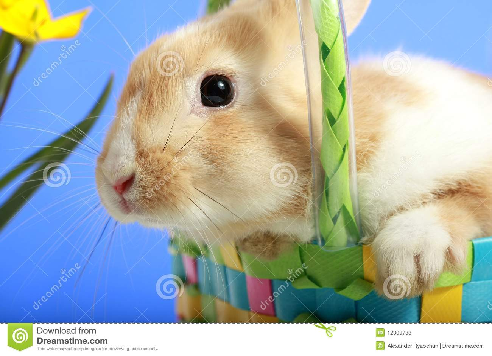 Coelho de Easter em uma cesta