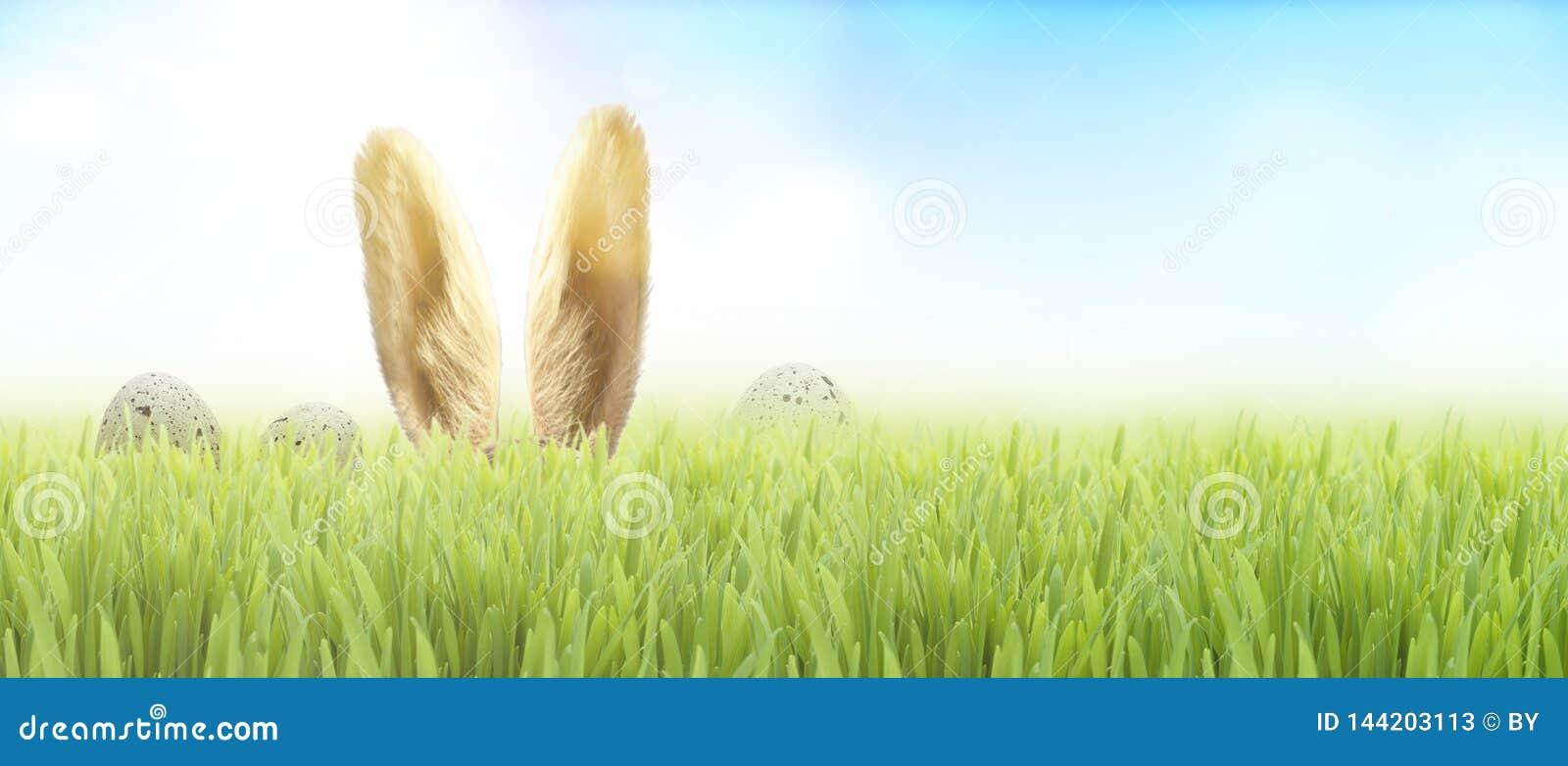 Coelho de Easter na grama