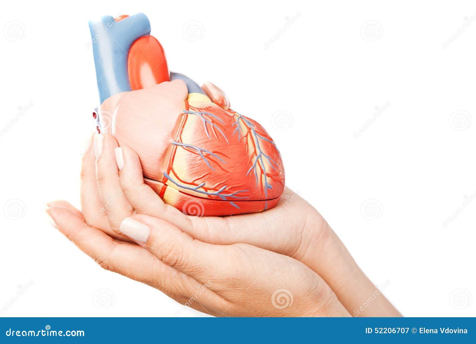 Coeur dans des mains