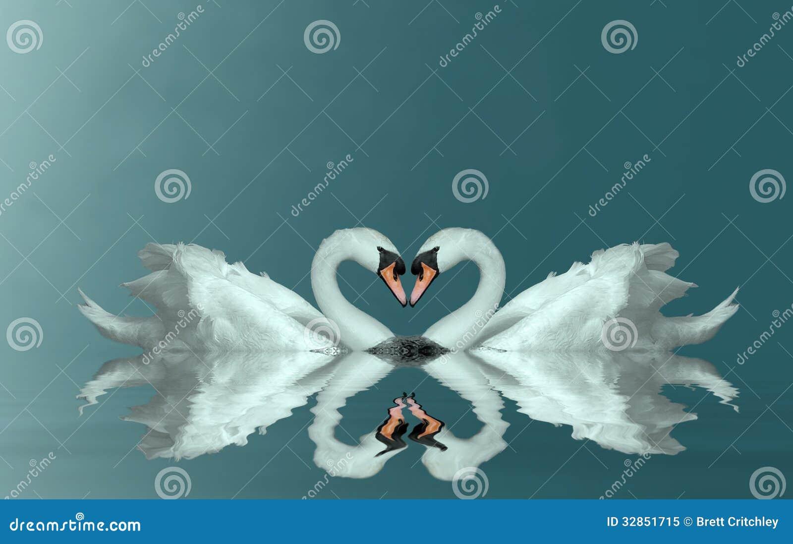 Coeur de cygnes d amour