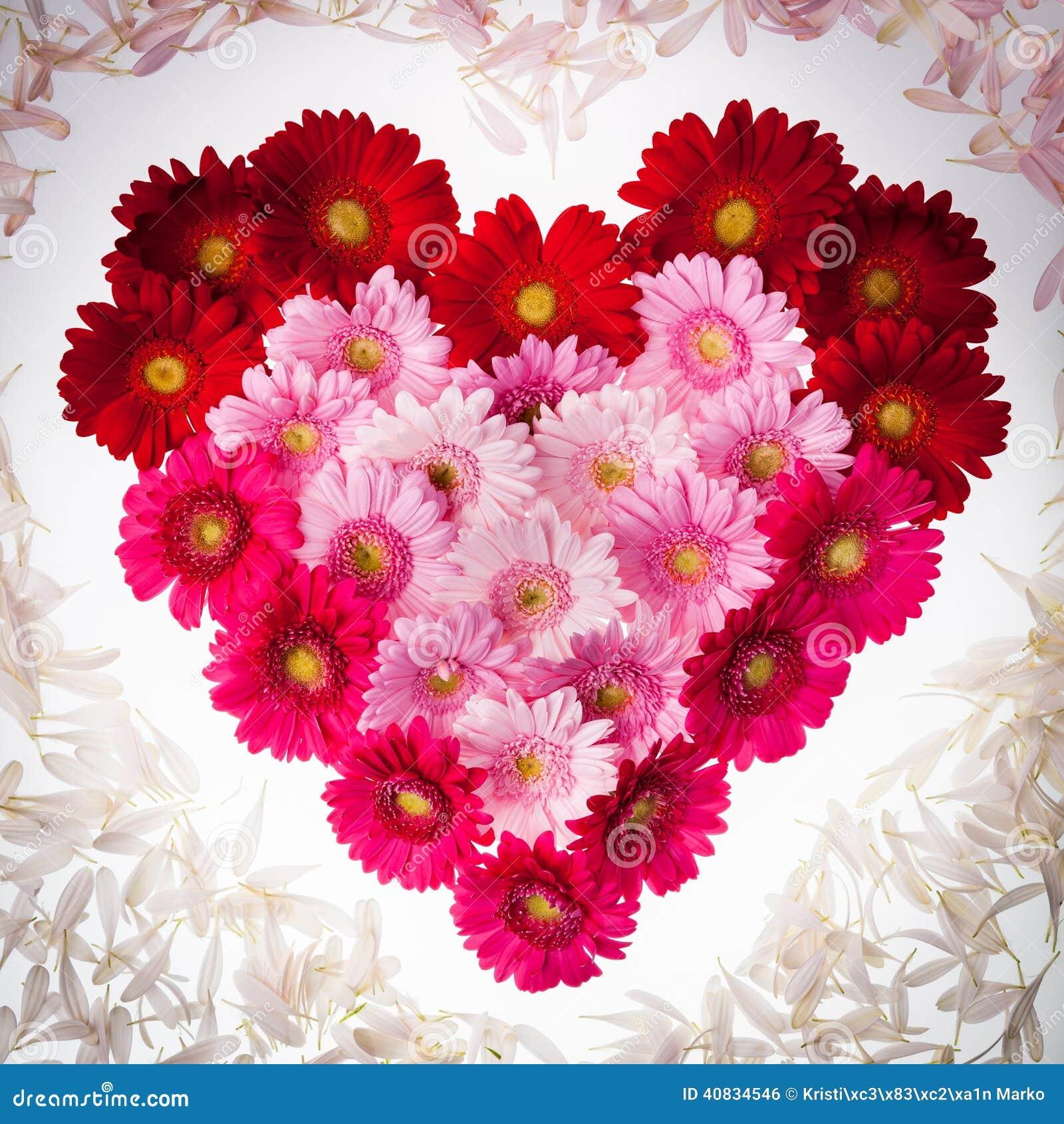 Coeur de fleur de gerbera avec des p tales photo stock image 40834546 - Coeur avec des fleurs ...
