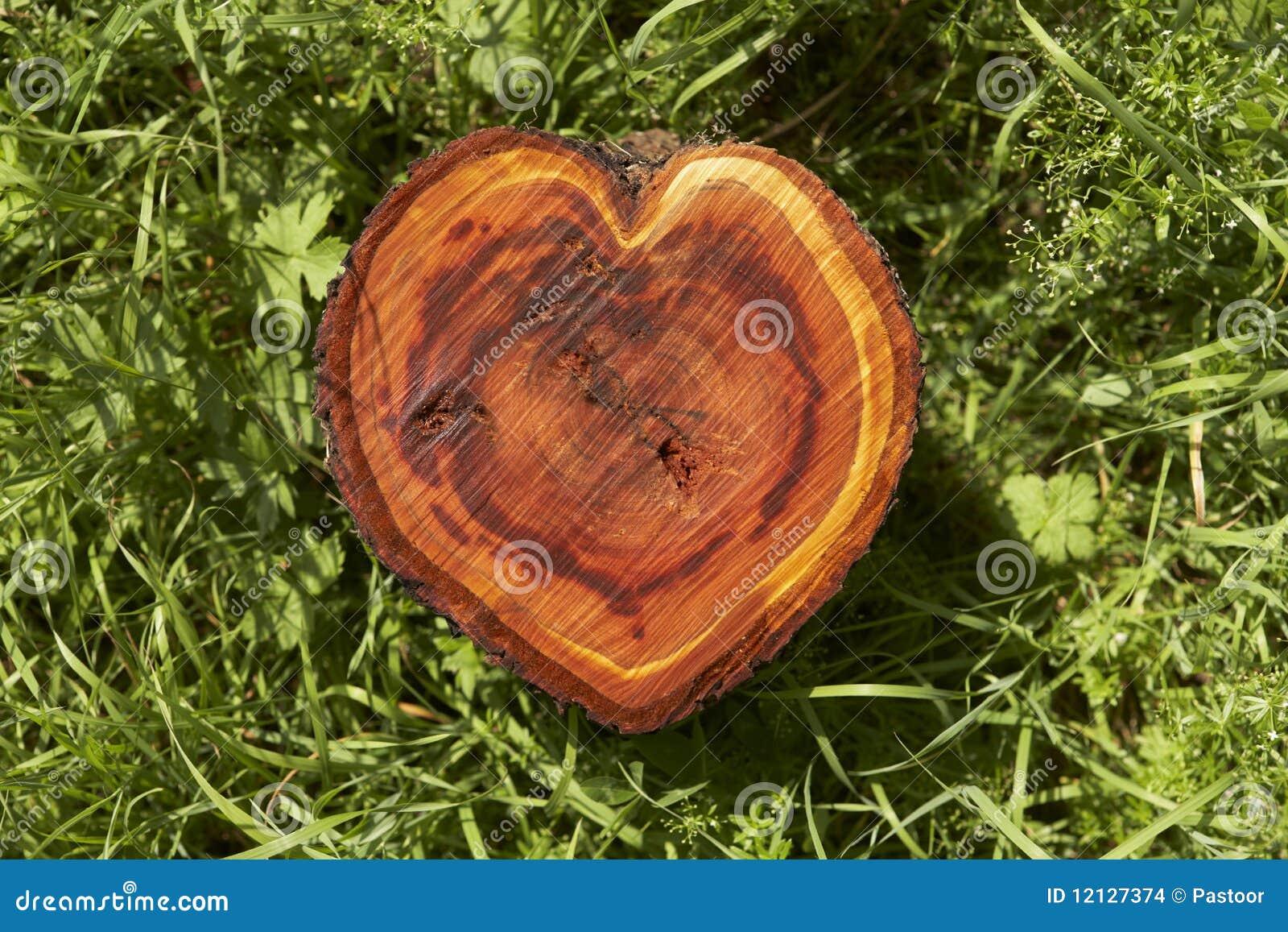 Coeur de logarithme naturel