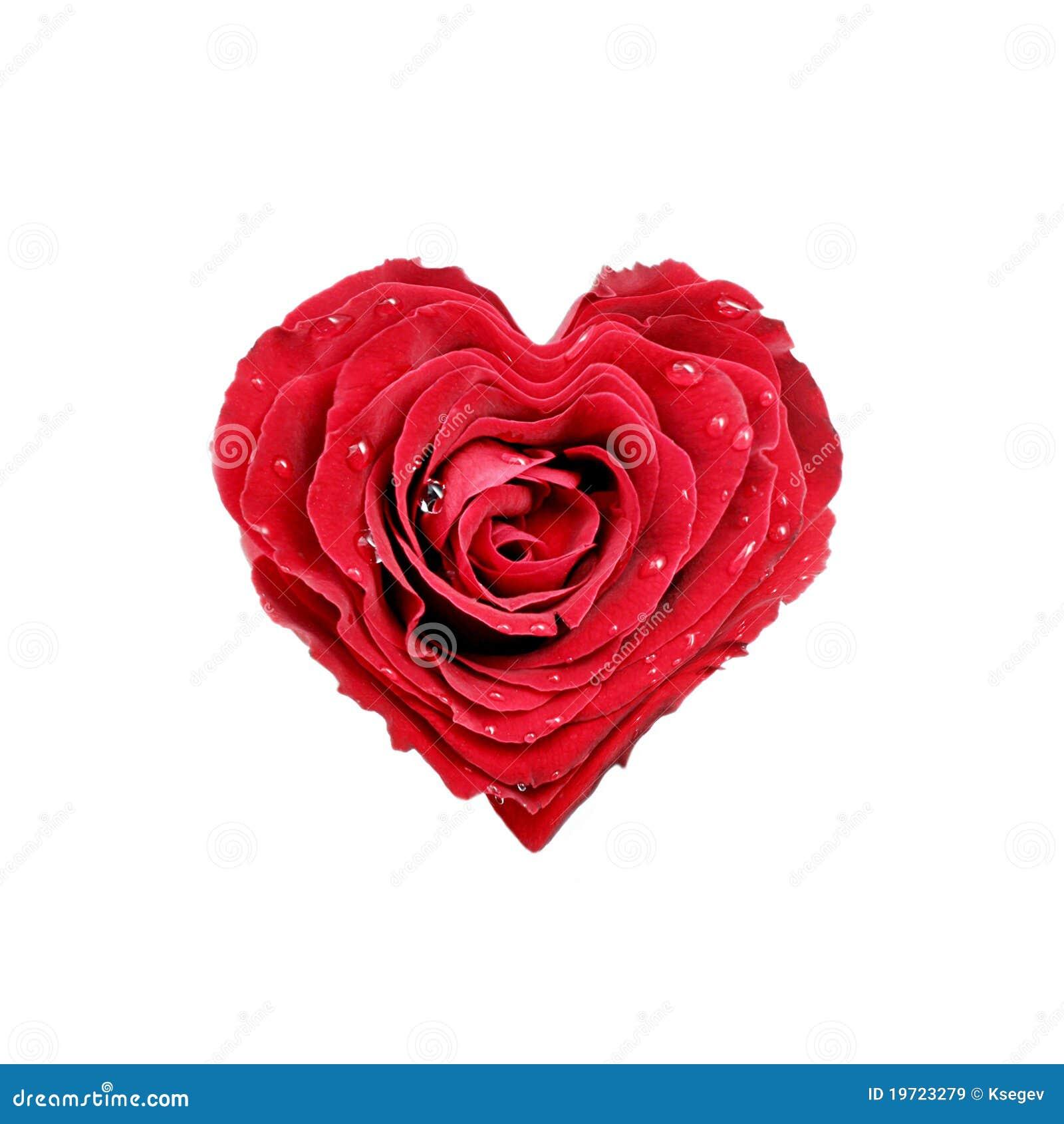 coeur de rose images libres de droits image 19723279. Black Bedroom Furniture Sets. Home Design Ideas
