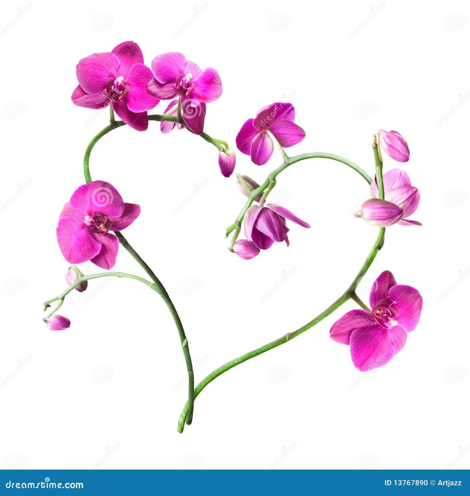 orchidee du coeur