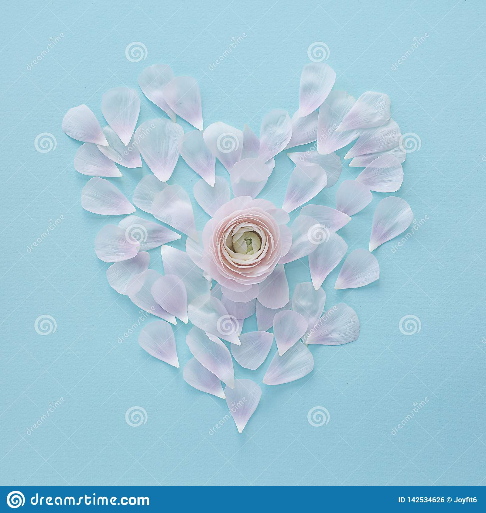 Coeur des pétales rose-clair sur un fond de texture carré bleu-clair avec une fleur au centre