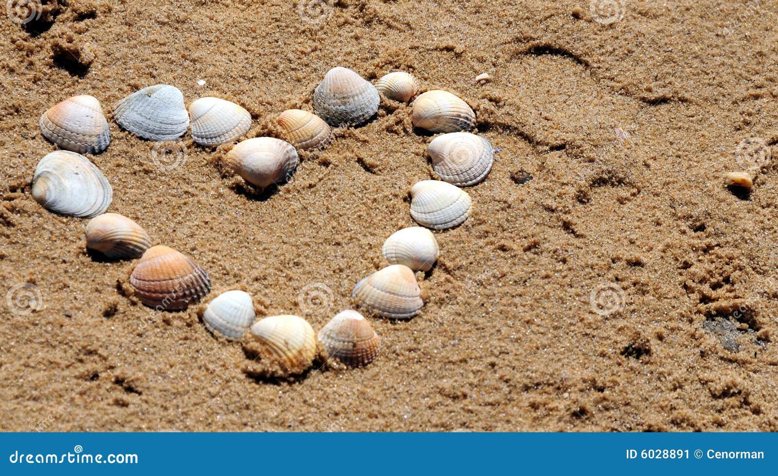Coeur des seashells