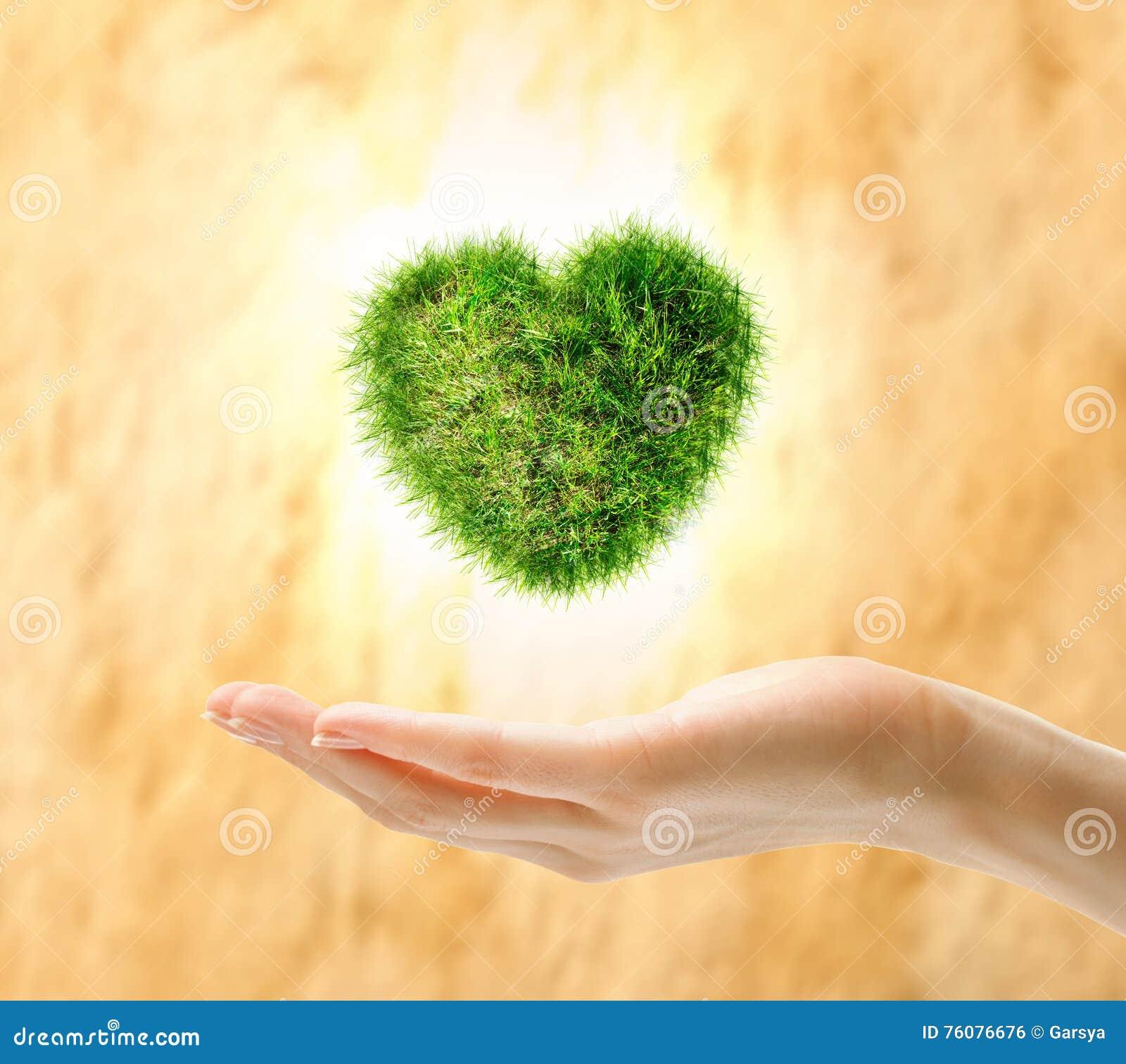 Coeur fait en herbe verte en main
