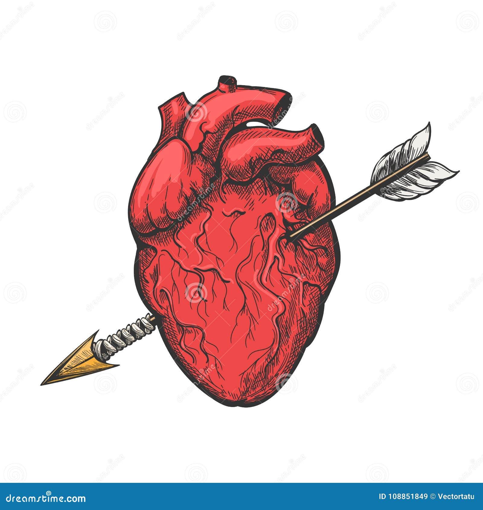 Coeur humain avec gravure à l eau-forte de tatouage de flèche