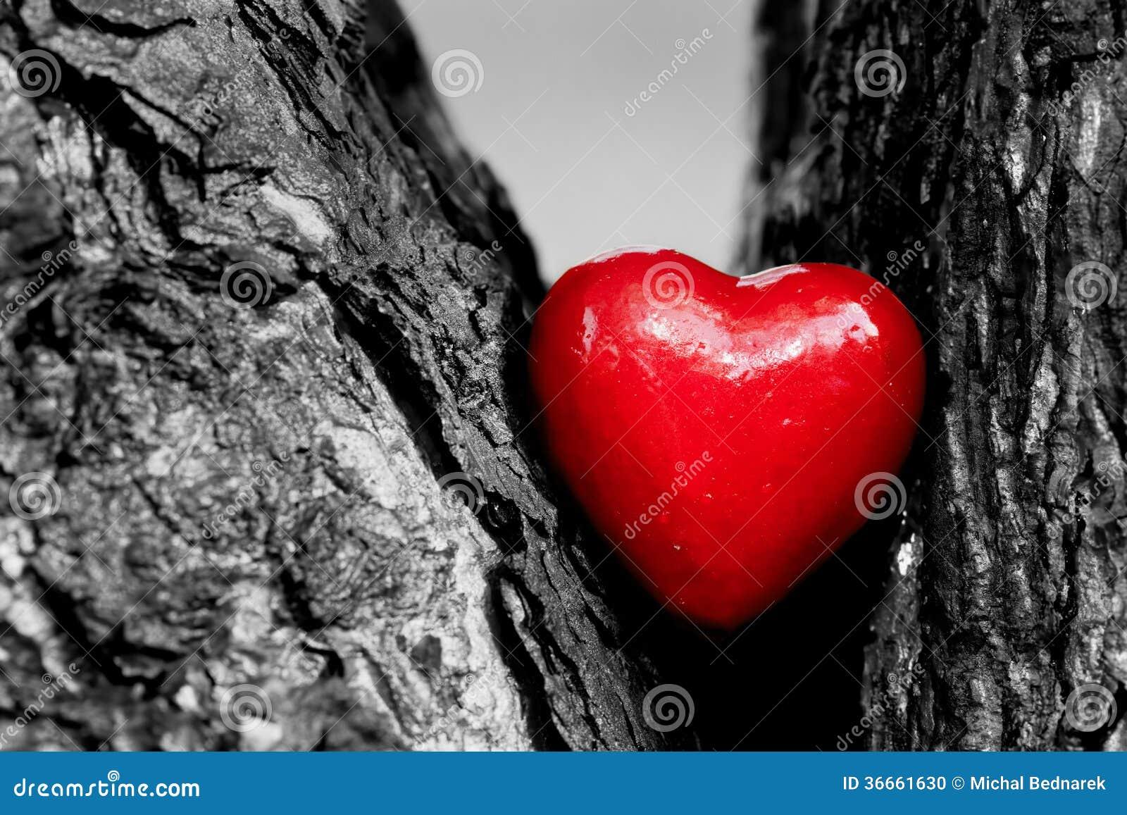 Coeur rouge dans un tronc d 39 arbre amour romantique photo stock image 36661630 - Photo romantique noir et blanc ...