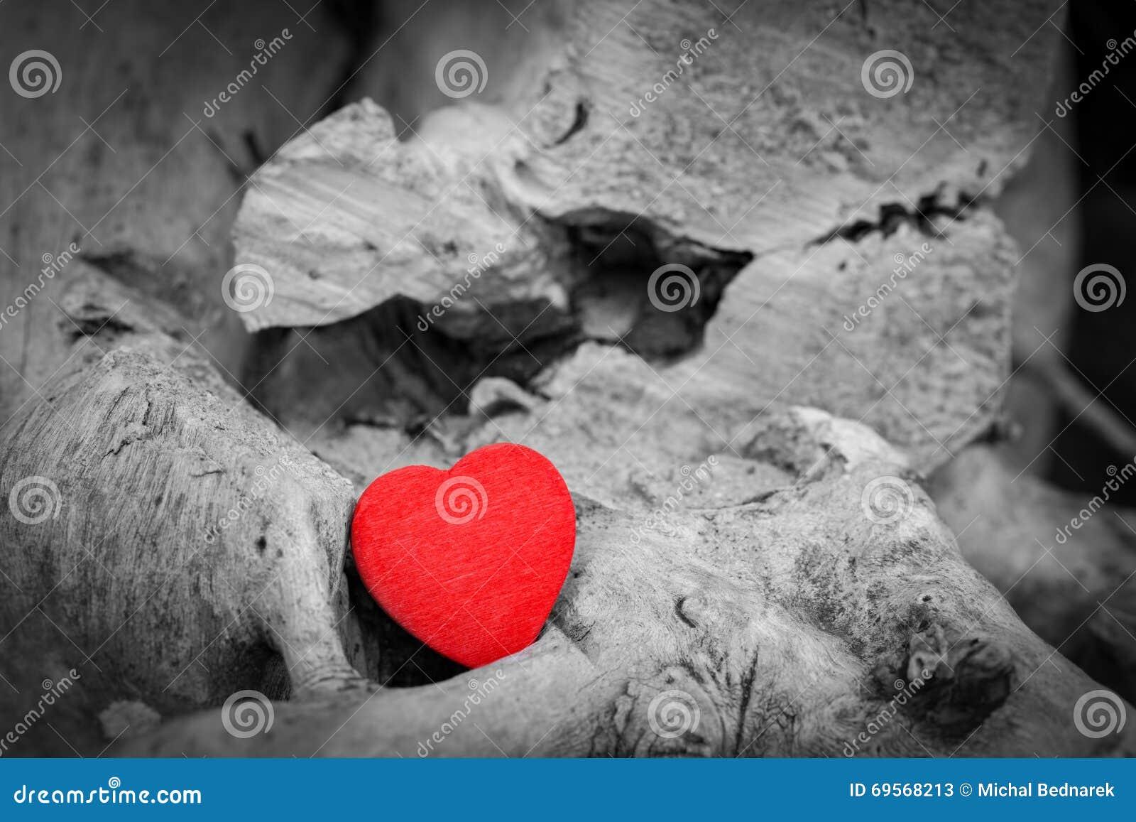 Coeur Rouge Dans Un Tronc Et Des Branches Darbre Symbole D