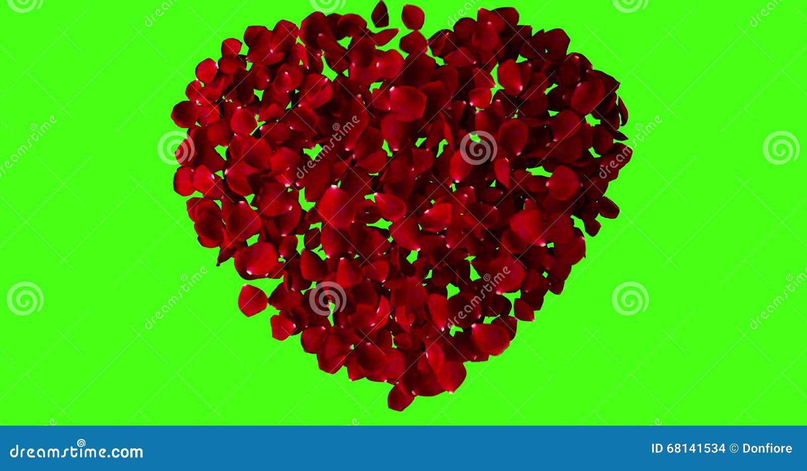 Coeur Rouge Des Petales De Rose Volant Avec Le Vortex Sur La Cle De Chroma Fond D Ecran Vert