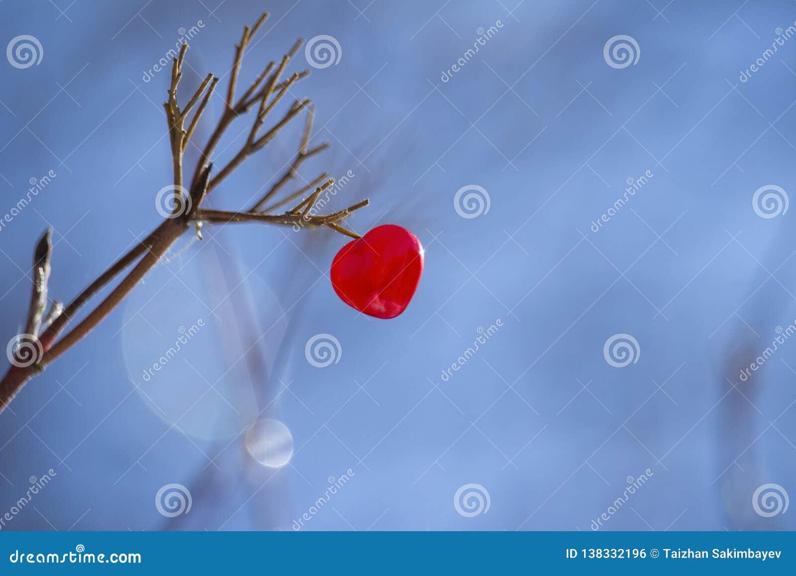 Coeur rouge sur une branche d arbre