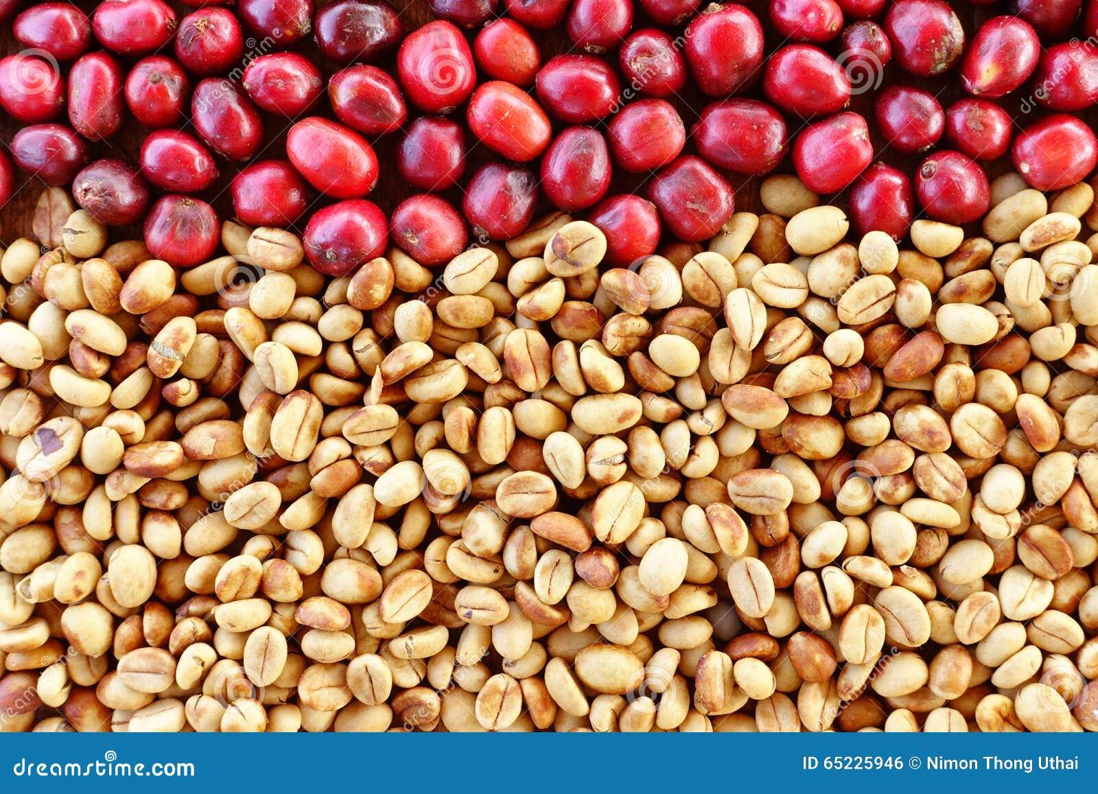 Coffe fasole i świeże jagod fasole