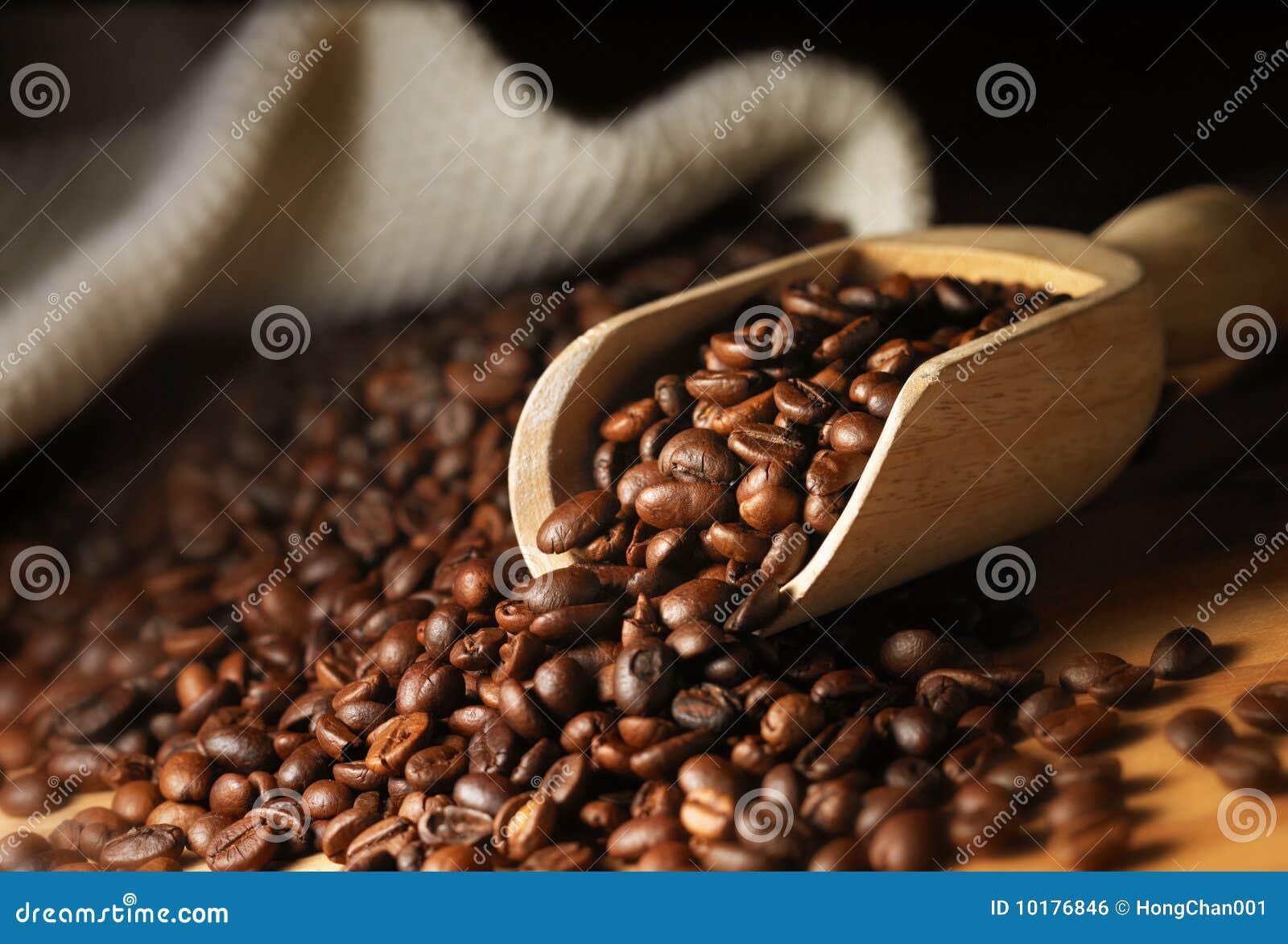 Coffee Bean Royalty Free Stock Image Image 10176846
