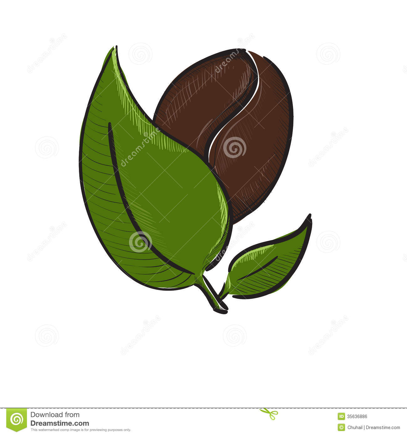 Coffee bean with leaves isolated on white stock vector for How to draw a coffee bean