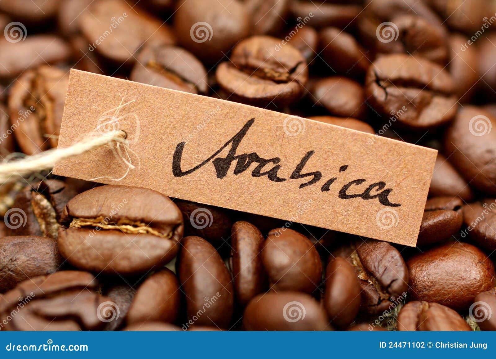 Caffe Rosto Vs Fresh Roast