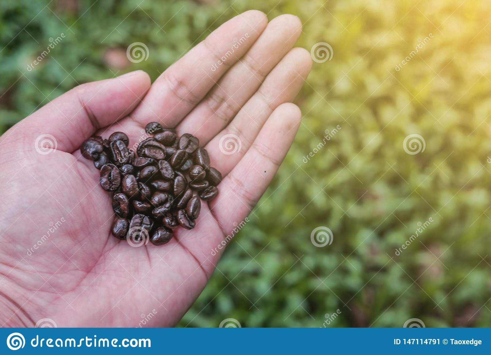 Soft focus,Coffee beans on hand