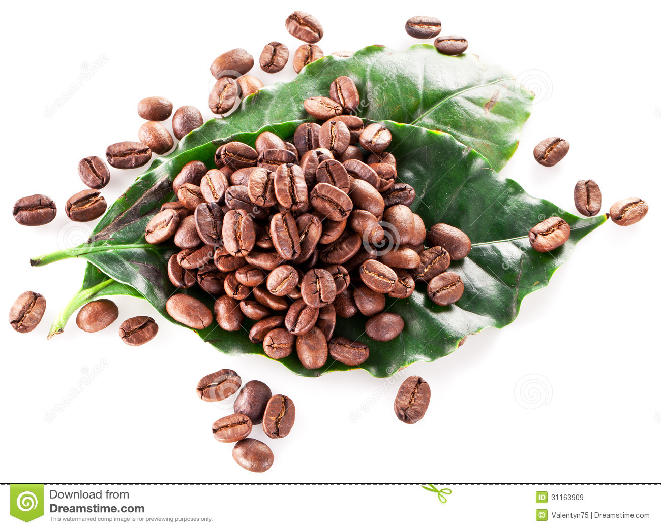 Coffee Beans On Leaf Royalty Free Stock Images - Image: 31163909 HD Wide Wallpaper for Widescreen