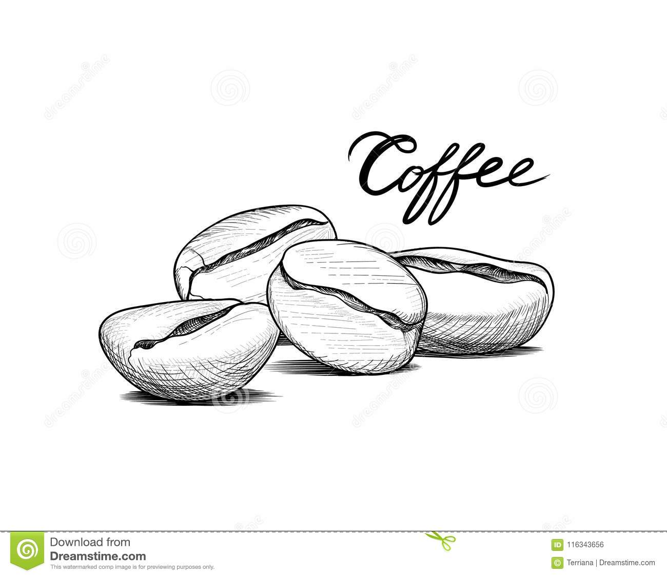 coffee beans sketch. drink coffee banner. line art food label stock