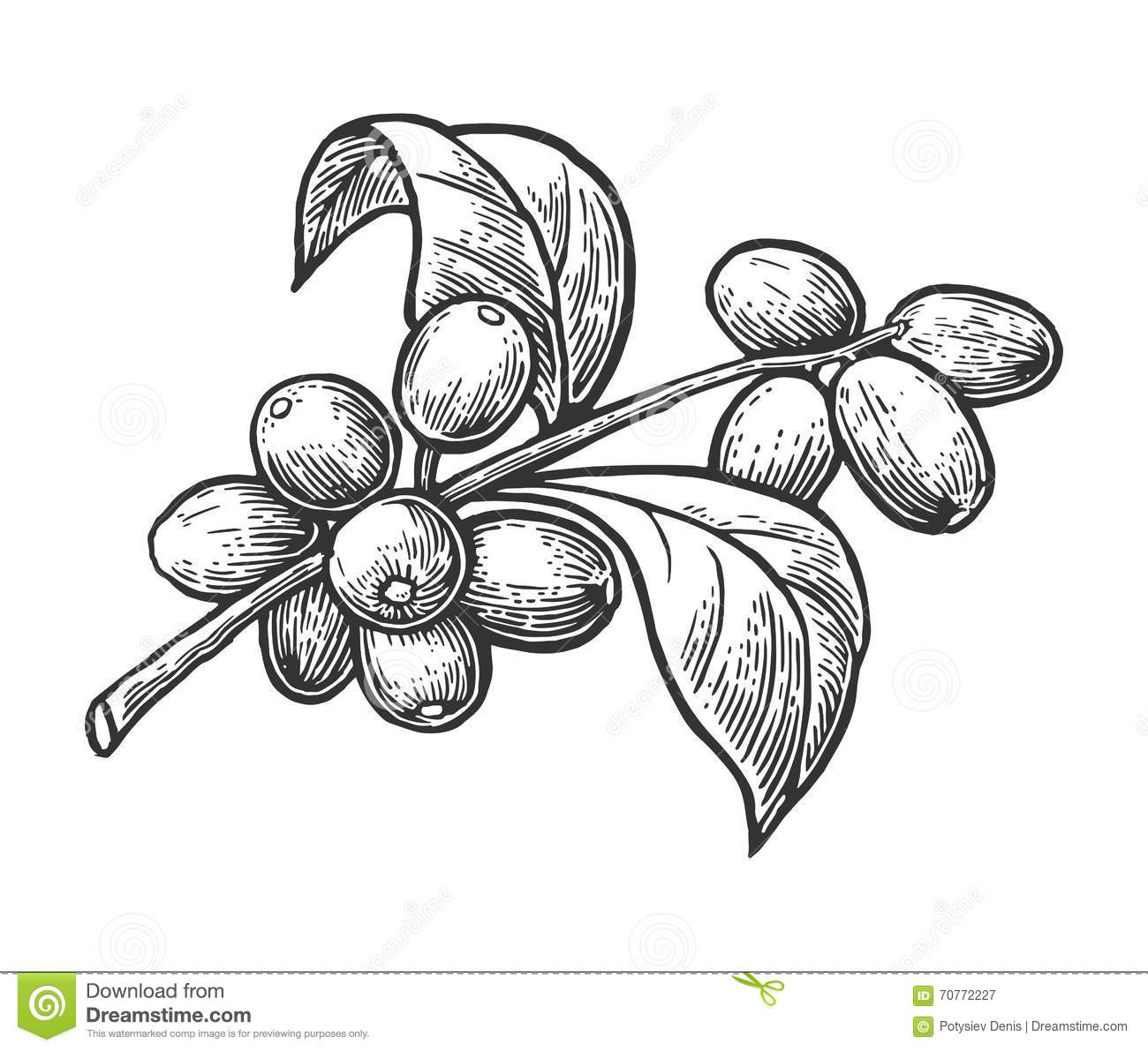 It is a graphic of Monster Coffee Plant Drawing