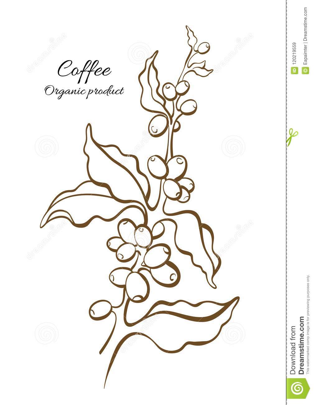 Coffee Branch With Leaves And Beans Vector Stock Vector