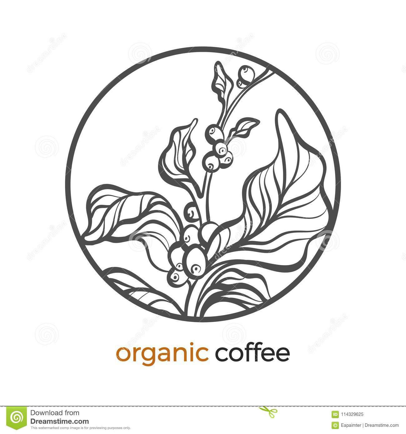 Coffee Branch Logo With Leaf And Bean Stock Vector Illustration Of