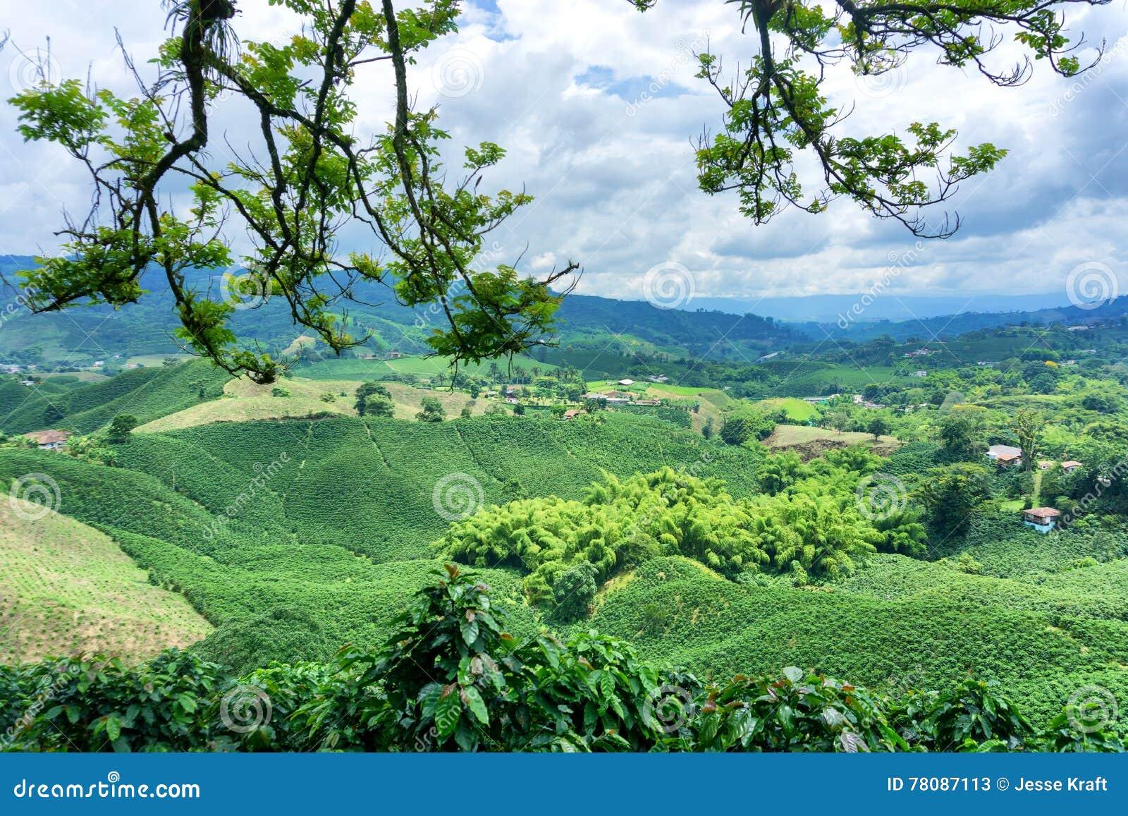 Coffee Landscape in Colombia