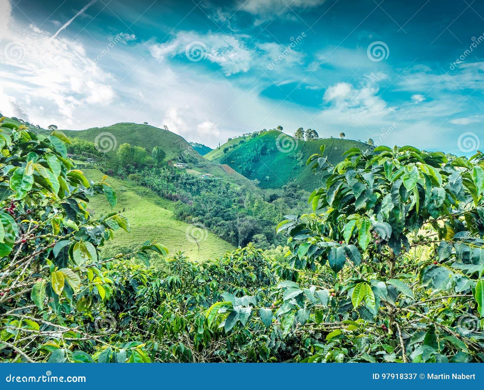 Coffee Mountain Jerico, Colombia