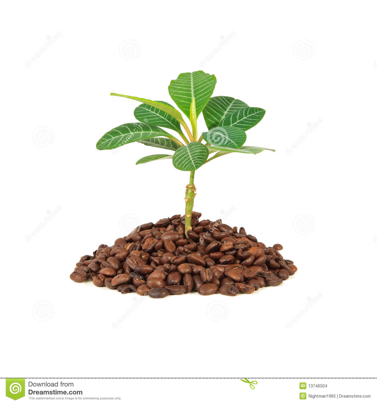 Coffee Plant Stock Images - Image: 13746504