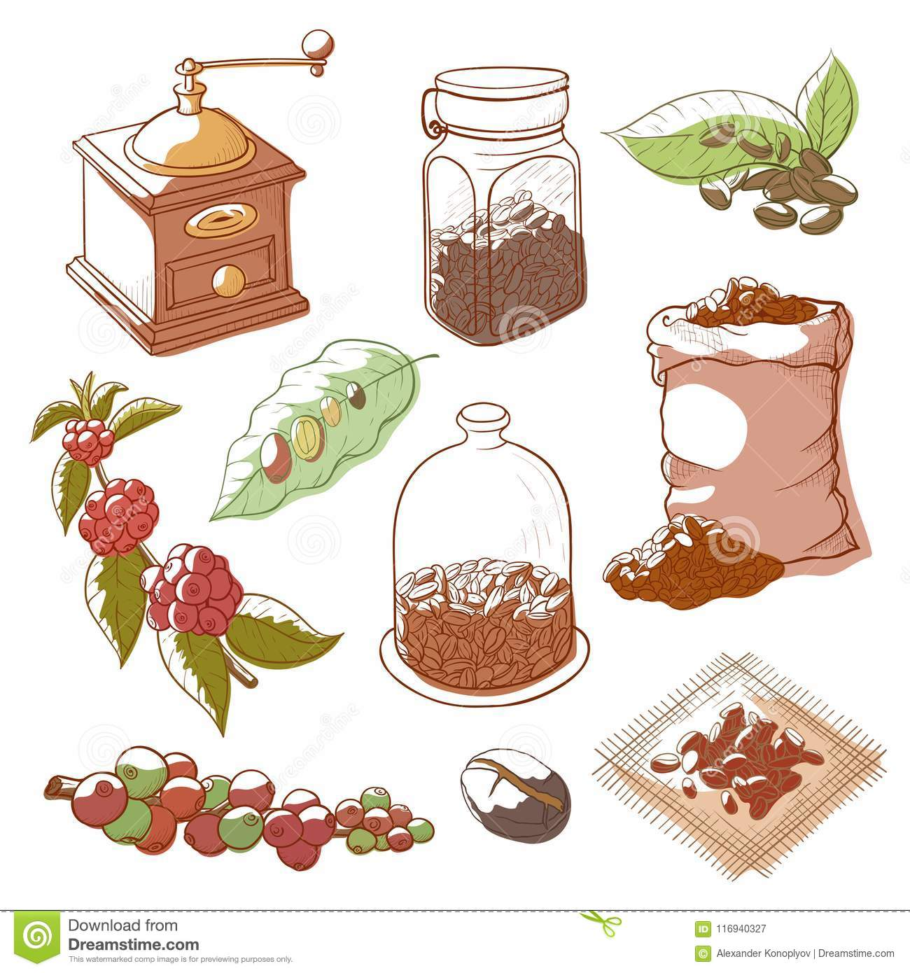 Coffee plant and beans stock vector. Illustration of ...