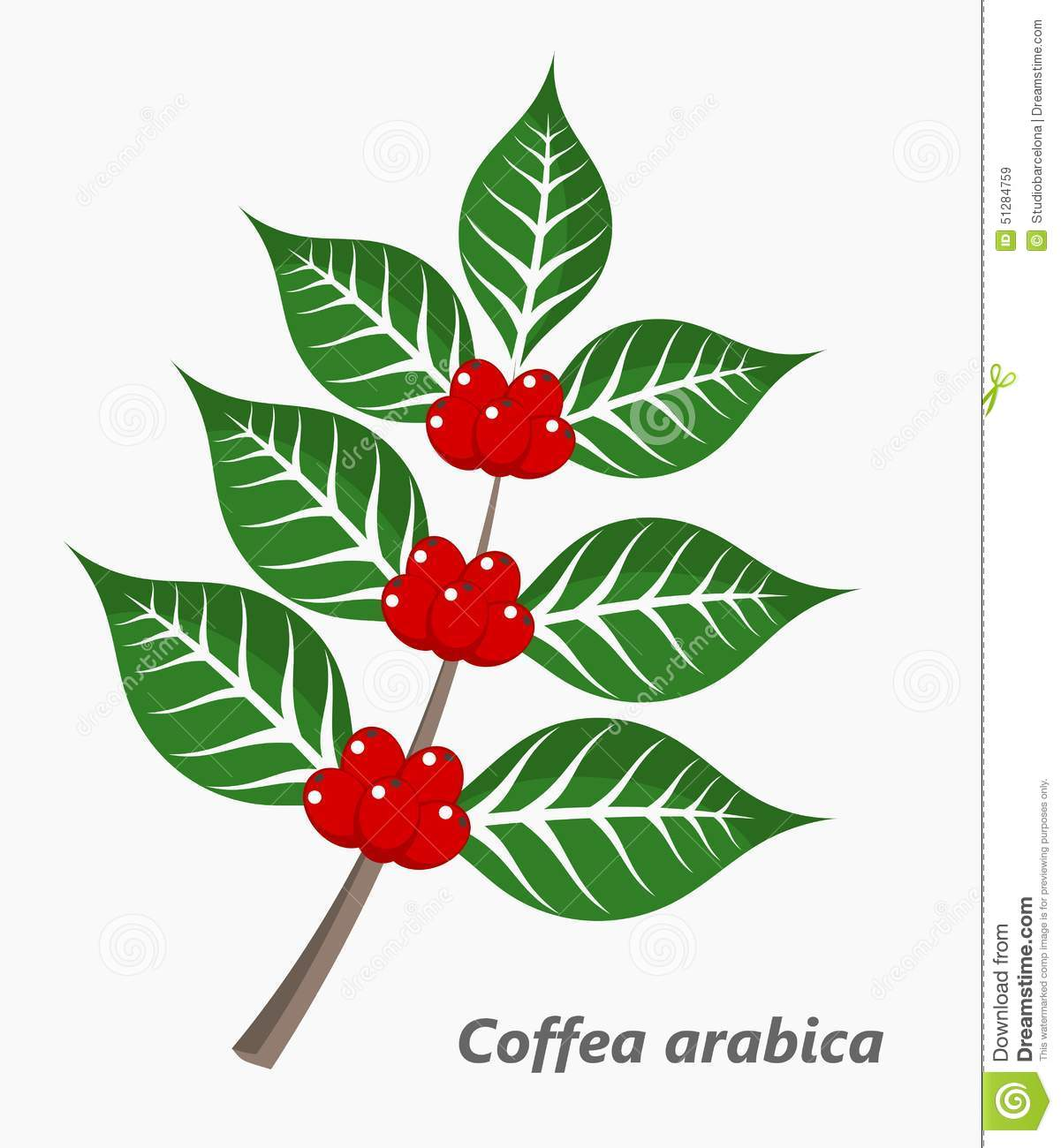 Coffee plant stock vector. Illustration of growth, branch ...