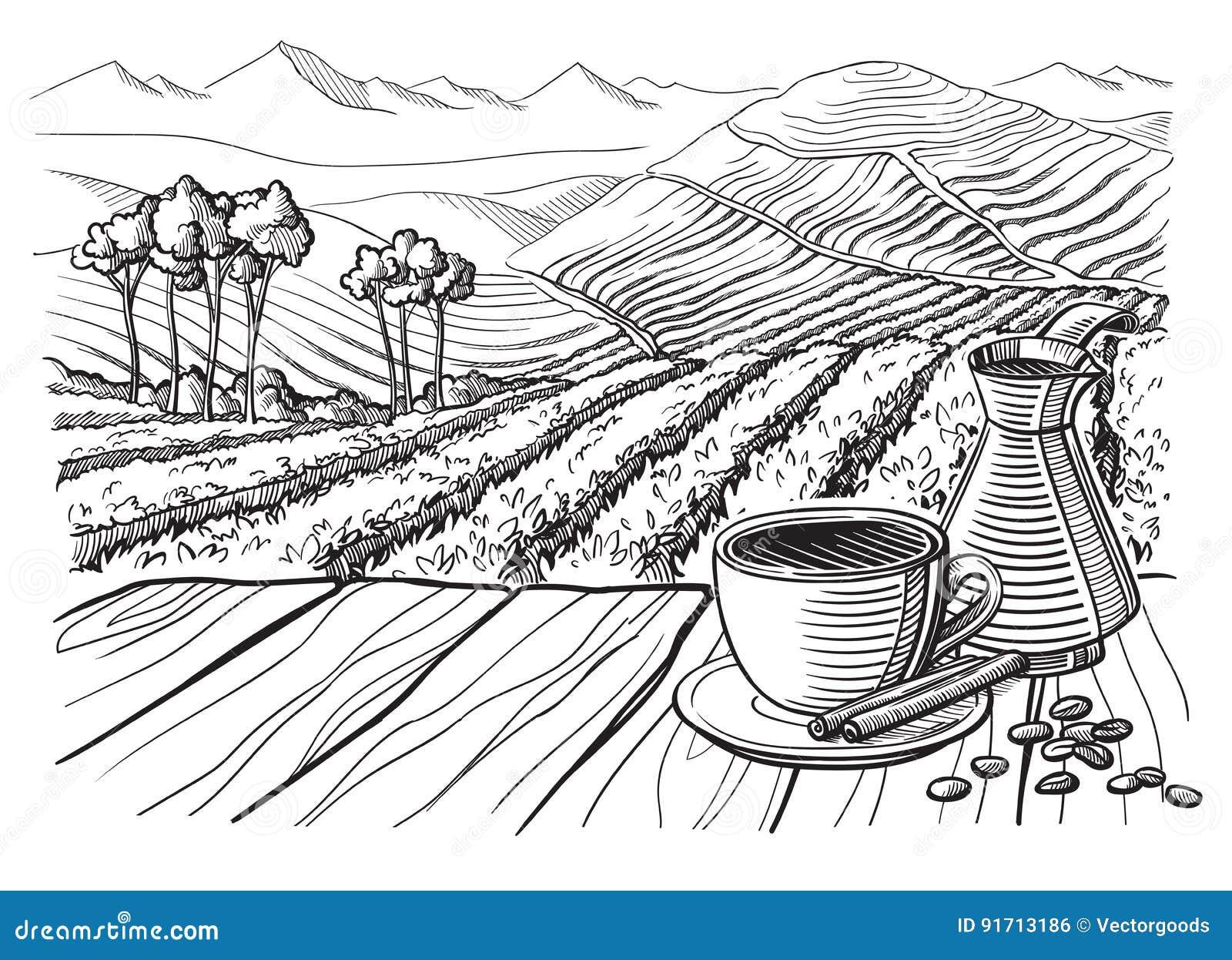 coffee plantation landscape vector illustration 91713186. Black Bedroom Furniture Sets. Home Design Ideas