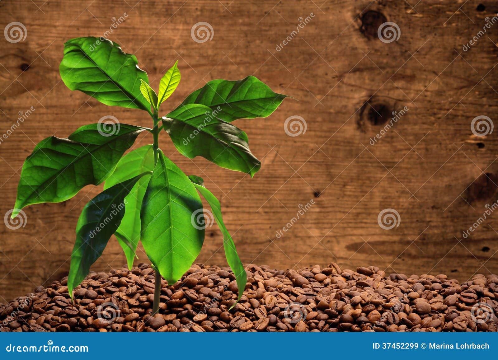 coffee how to make a leaf