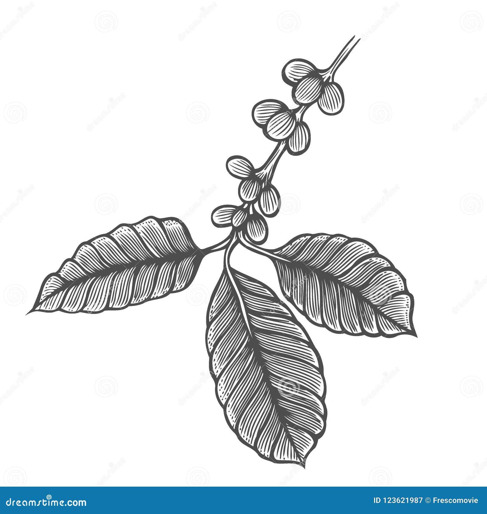 Coffee tree illustration stock vector illustration of design download coffee tree illustration stock vector illustration of design 123621987 thecheapjerseys Gallery
