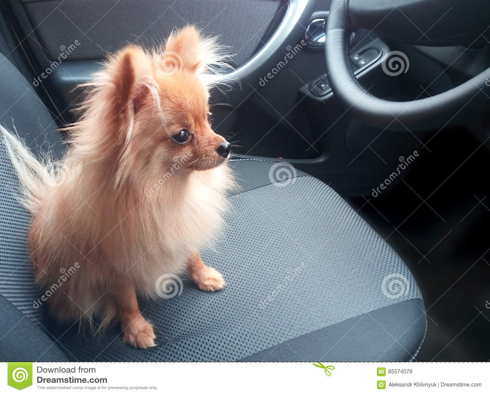 Coffre-fort se reposant de petit chien dans la voiture sur le siège arrière
