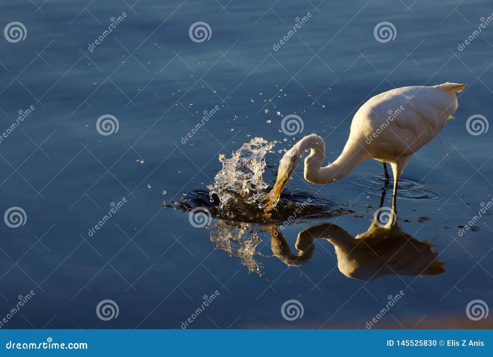 Cogida de los pescados