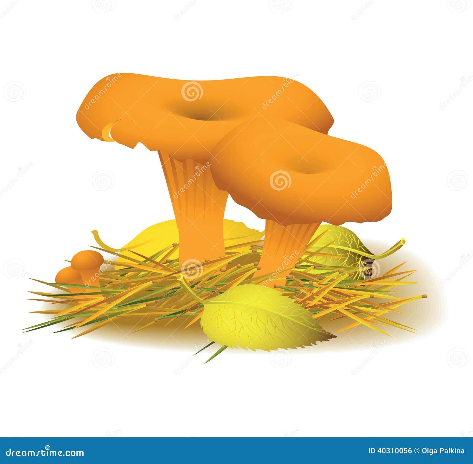 Cogumelo da prima