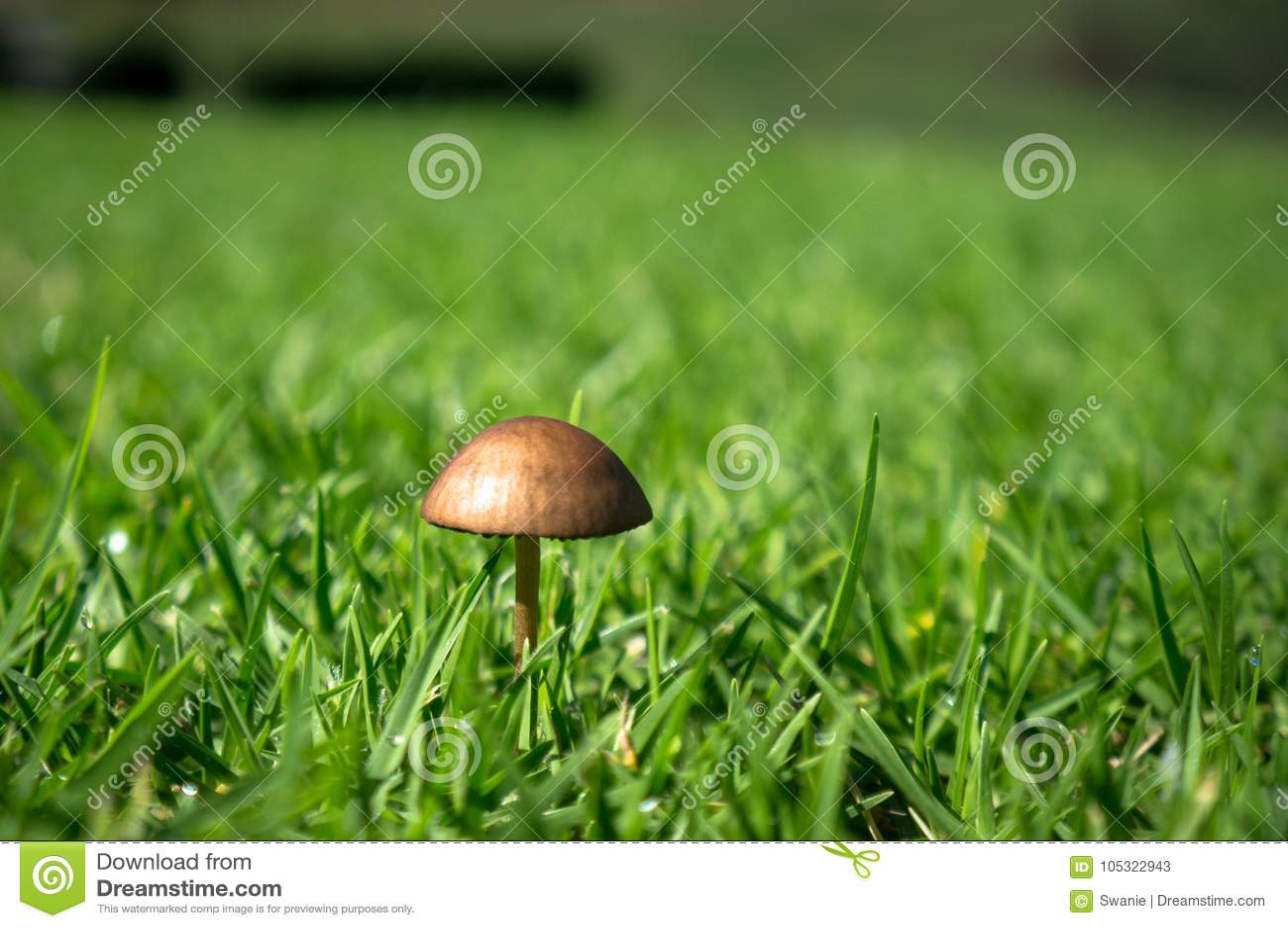 Cogumelo diminuto na grama verde