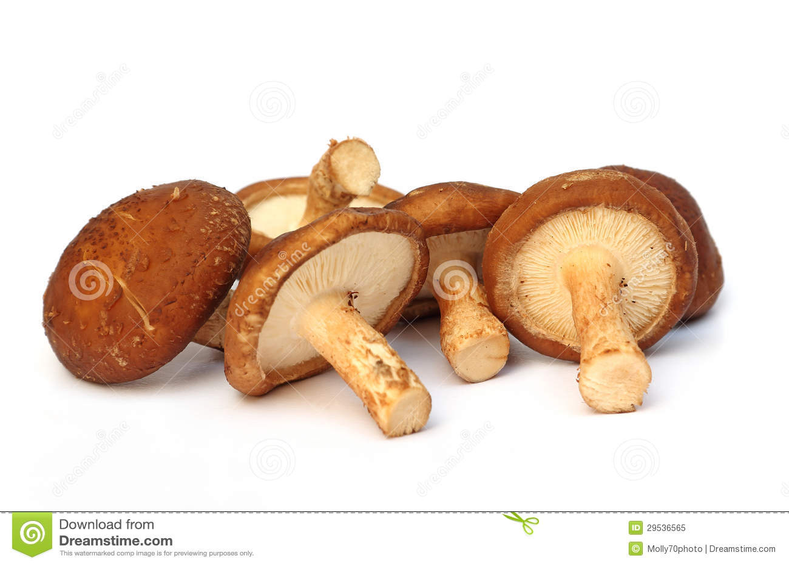 Cogumelo fresco no fundo branco