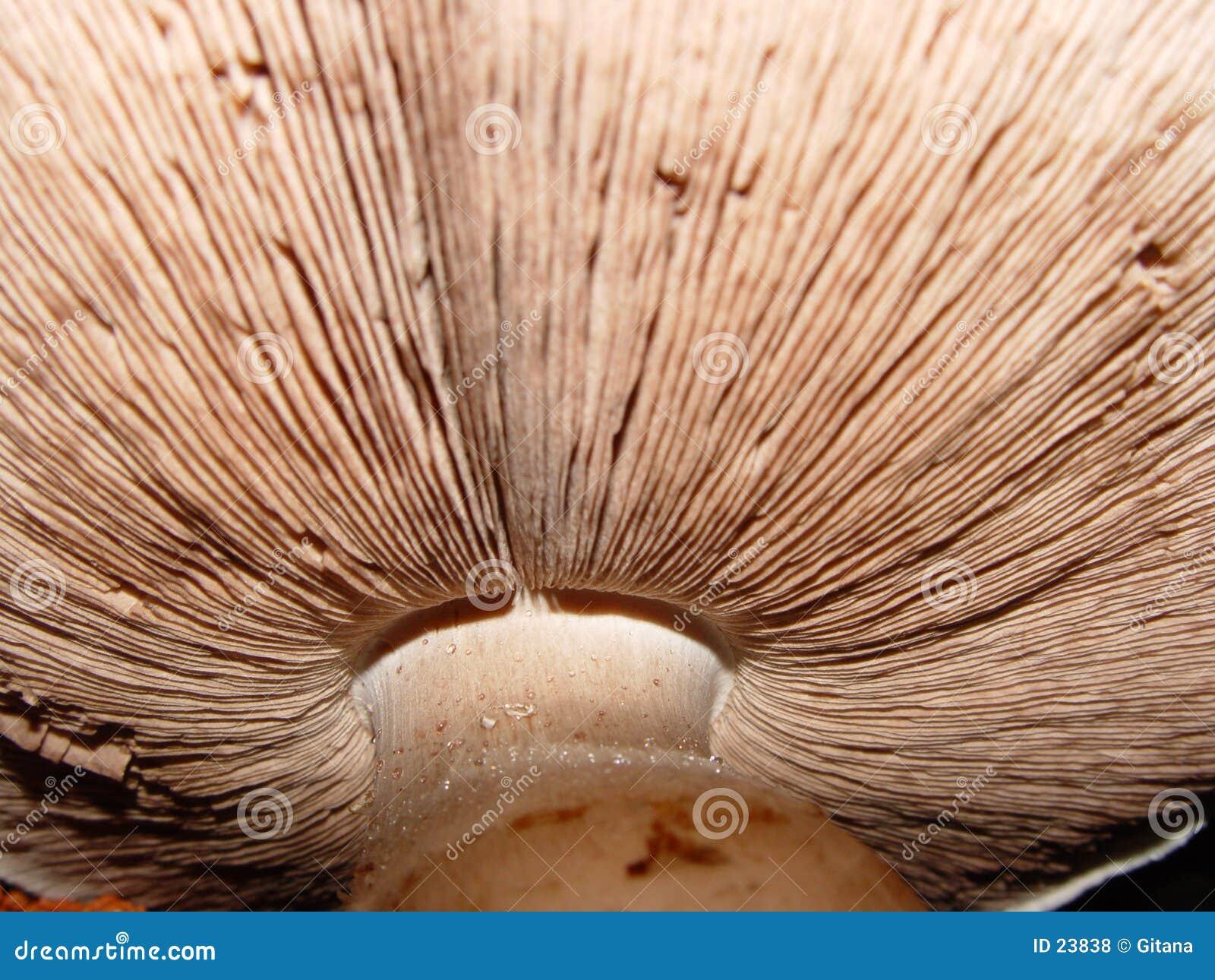 Cogumelo muito grande
