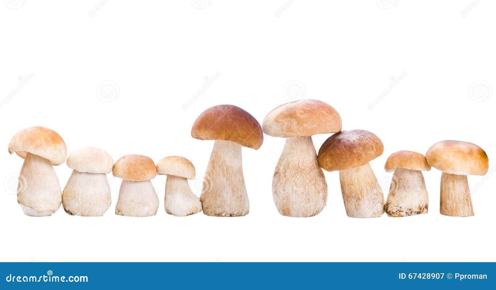Cogumelo no branco