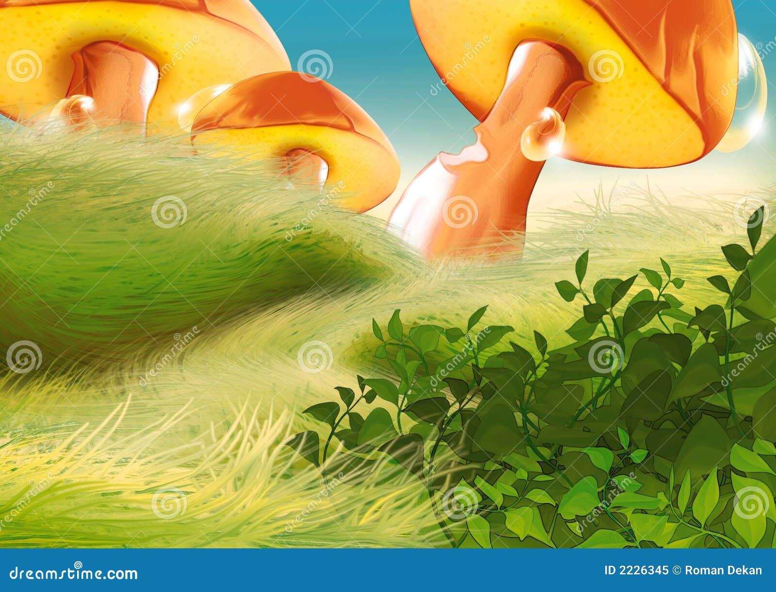 Cogumelos bonitos