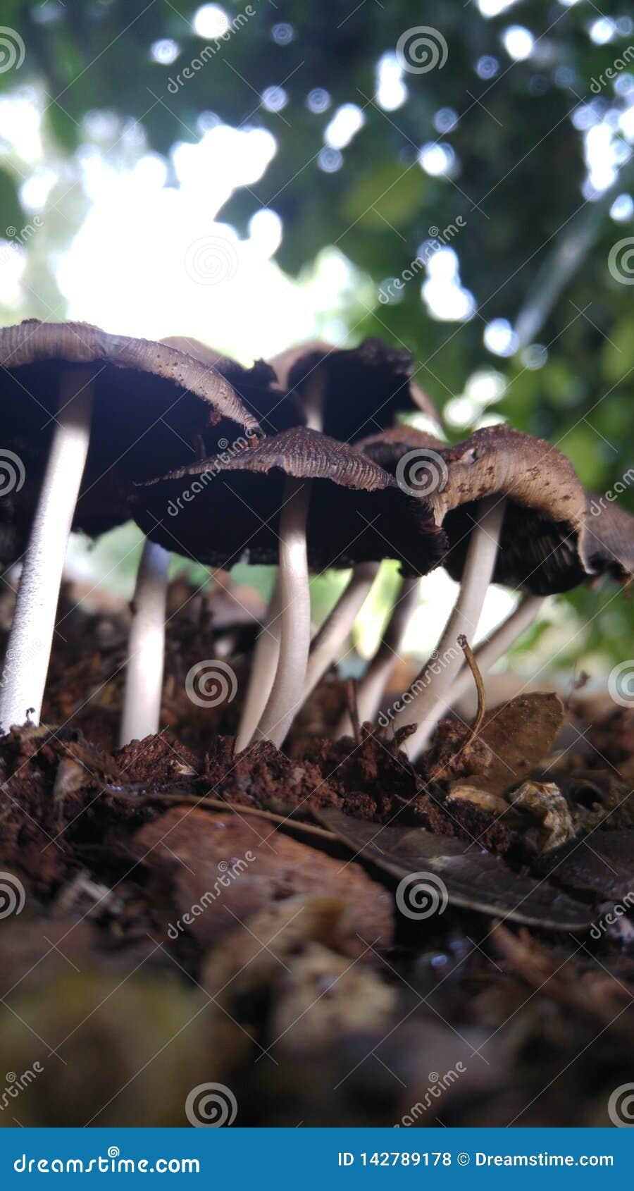Cogumelos de inverno