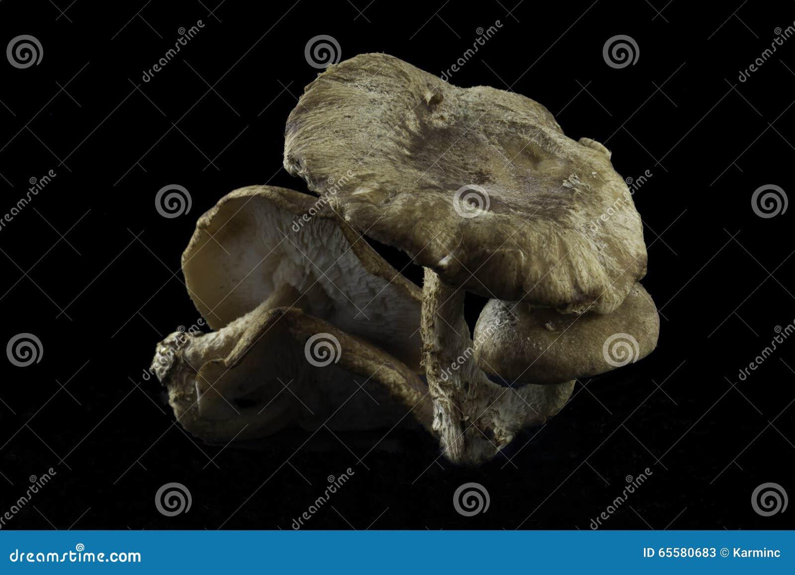 Cogumelos de Shitake