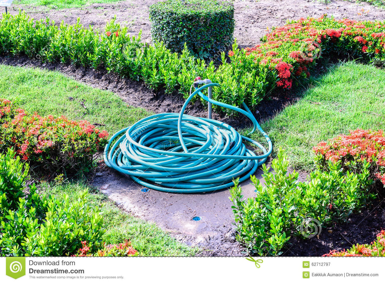 Coiled water hose in garden