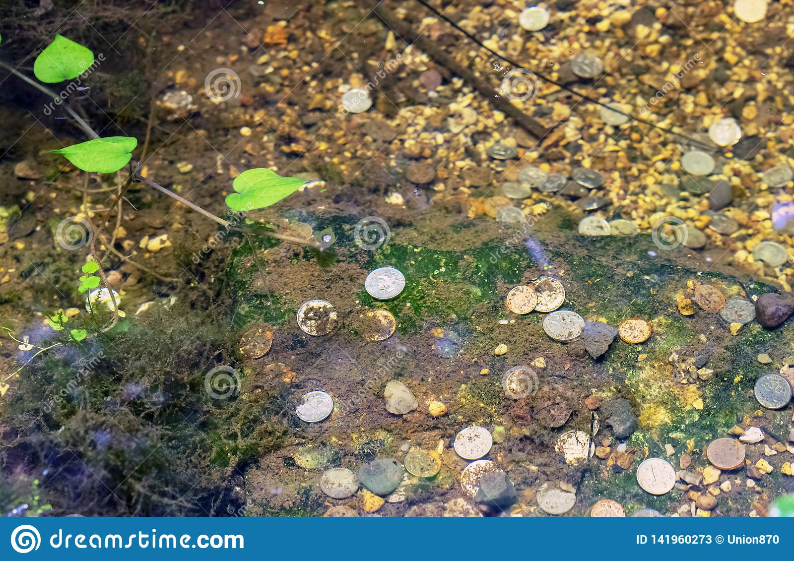 Coins lie on the bottom of the lake in the city park