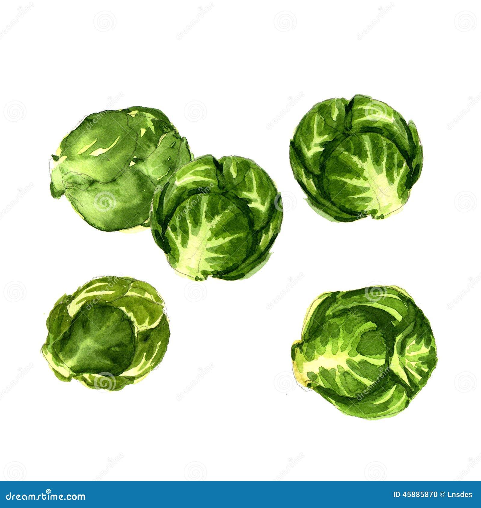 Col verde de las coles de Bruselas aislada