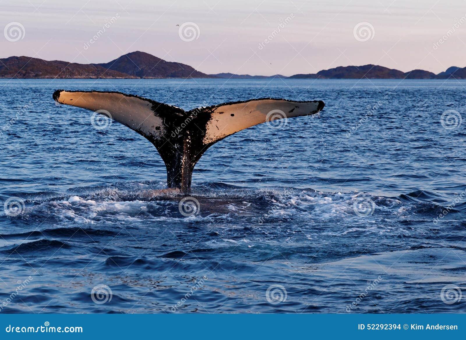 Cola del salto de la ballena